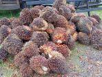 polisi-amankan-barang-bukti-kelapa-sawit-curian-di-parenggean-kabupaten-kotawaringin-timur-kalteng.jpg