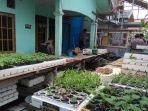 tanaman-hidroponik-di-depan-rumah-lud-45_20180814_165321.jpg