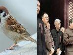 tribun-kalteng-burung-emprit-dibasmi-45-juta-rakyat-china-mati-kelaparan_20181011_124403.jpg