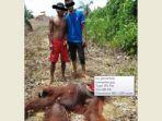 tribun-kalteng-orangutan_20170214_214418.jpg