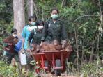 tribun-kalteng-orangutan_20170819_090353.jpg