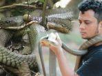 tribunkalteng-panji-sang-petualang-dan-ular-king-kobra-di-kapuas.jpg