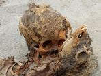tribunkalteng-situs-ritual-pembantaian-manusia-di-peru_20180501_080005.jpg