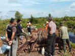 tribunkaltengcom-kayu-ilegal-tn-sebangau.jpg