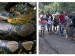 ular-piton-yang-hampir-menewaskan-petani-di-bone_20170402_145050.jpg