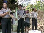 ular-piton_20180904_184401.jpg