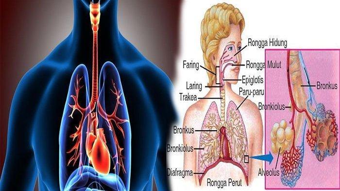 Waspadah, Ini 10 Penyakit Gangguan Pernapasan yang Dapat Menular Melalui Udara
