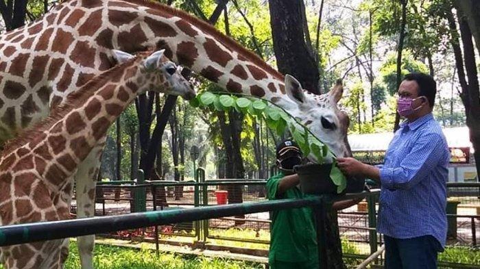 Taman Margasatwa Ragunan Dihuni Lebih Dari 2.000 Satwa, Harga Tarif Masuk dan Tarif Fasilitas Wahana