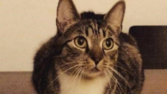 Inilah Alasannya Mengapa Nabi Muhammad Menyayangi Kucing Tribun Kaltim