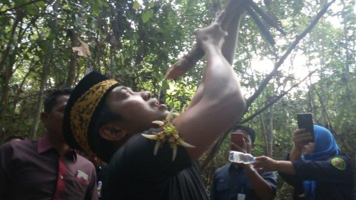 Ada Kayu Bajakah di Hutan Penajam, Bupati Abdul Gafur Masud Ingatkan Tetap Jaga Kelestarian Alam
