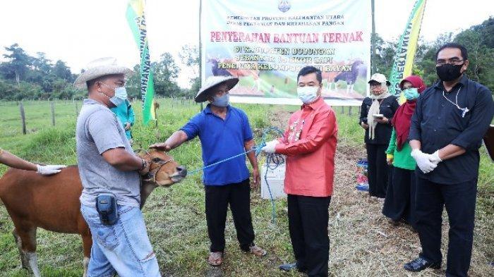 Pjs Gubernur Serahkan Bantuan 15 Ekor Sapi kepada Petani Desa Pejalin di Bulungan