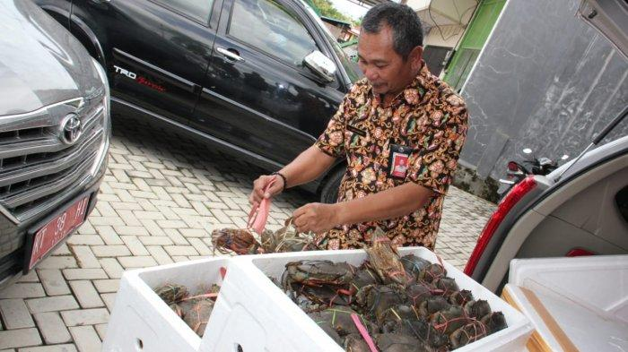 Kepala DKP Kaltara: Pemprov Tak Janjikan Legalisasi Penangkapan Kepiting, Larangan Itu Aturan Pusat