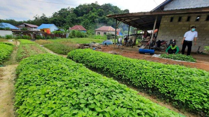 Ekspor Komoditas Hortikultura Asal Kalimantan Utara di Tengah Pandemi Covid-19 Melejit