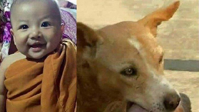 Bayi Ini Dulu Diselamatkan Seekor Anjing dari Tempat Sampah, Begini Kondisinya Sekarang