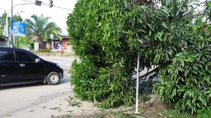 Warga Melakukan Penebangan Liar Pohon di Balikpapan, Siap-siap Saja Bentuk Hukuman Ini akan Menjerat