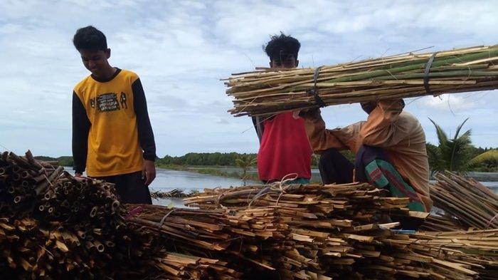 Penanaman Mangrove Hadirkan Manfaat bagi Petambak di Muara Badak