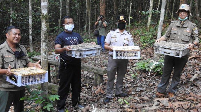 Ratusan Burung Cucak Ijo Kalimantan Gagal Berlayar ke Surabaya, Dicegat Petugas Pelabuhan Semayang