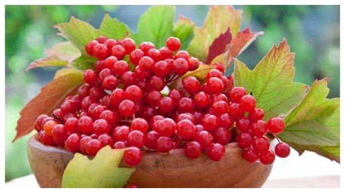 Ternyata Cranberry Memiliki Banyak Manfaat Bagi Kesehatan Tubuh, Diantaranya Bisa Memperkuat Usus