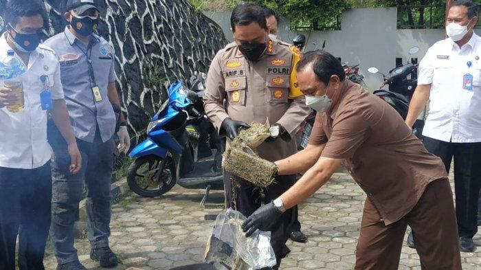 5 Kilogram Ganja Asal Medan Dimusnahkan BNNP Kaltim, Seorang Pelaku Ditangkap