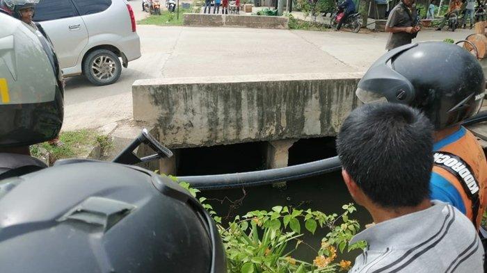 Bikin Warga Kutai Timur Heboh, Buaya 2 Meter Muncul di Parit Dekat Pemukiman, Begini Nasibnya Kini