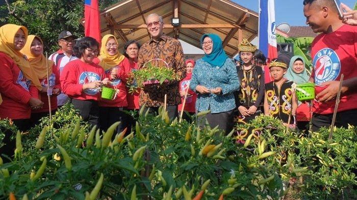 Deputi Gubernur Bank Indonesia Panen Cabai, Kampanye Inflasi dan Pengelolaan Keuangan Keluarga