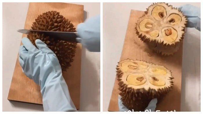 Viral di Medsos Begini Cara Unik Orang Korea Selatan Membuka Durian, Apakah Lebih Mudah dan Praktis?