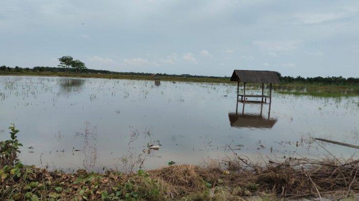 Banjir di Babulu, Wabup Penajam Paser Utara Ingatkan Kemungkinan Air Tambah Tinggi