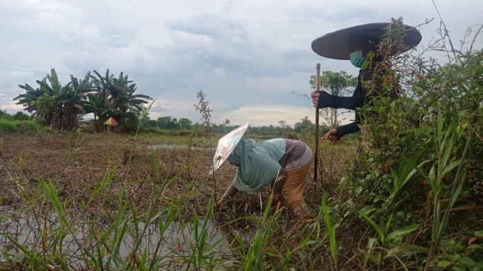 Petani di Malinau Usul Bantuan Alat Pertanian, Pengadaan Dianggarkan Tahun 2022