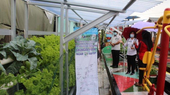 Tak Masuk Wilayah Food Estate, Balikpapan Tetap Kuatkan Tanaman Holtikultura