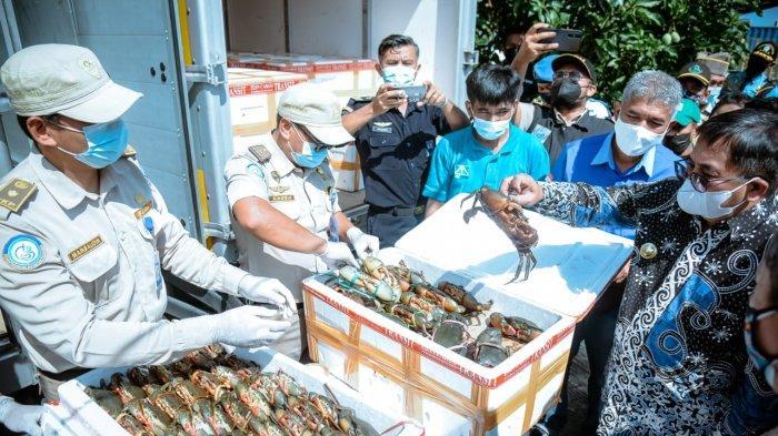 Ekspor Perdana, Balikpapan Terbangkan 7 Ton Kepiting Bakau ke China