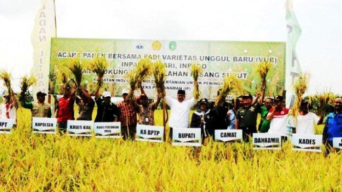 Hadiri Panen Padi Varitas Unggul Baru di Anggana, Bupati Senang Sektor Pertanian Jadi 13,7 Persen