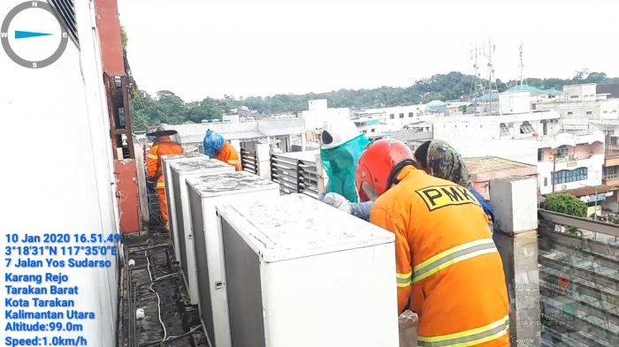 Personel Damkar Evakuasi Serangan Lebah Madu Hutan di Grand Tarakan Mall, Begini Aksinya