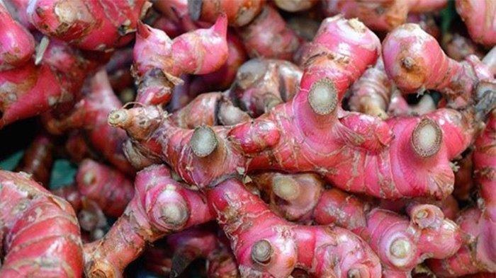 Bukan Hanya Menghangatkan Tubuh, Ini 8 Manfaat Jahe Merah Salah Satunya Mengurangi Kadar Kolesterol