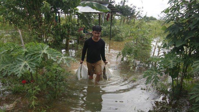 Jagung dan Kacang Terendam Banjir, Petani di Samarinda Gagal Panen, Biasa 25 Karung Sisa 5 Karung - hasil-tani-terendam.jpg