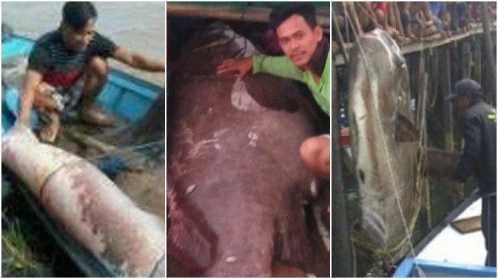 HEBOH Hewan Misterius di Pulau Bunyu, Ini 5 Temuan Makhluk Laut Raksasa yang Pernah Geger di Kaltim