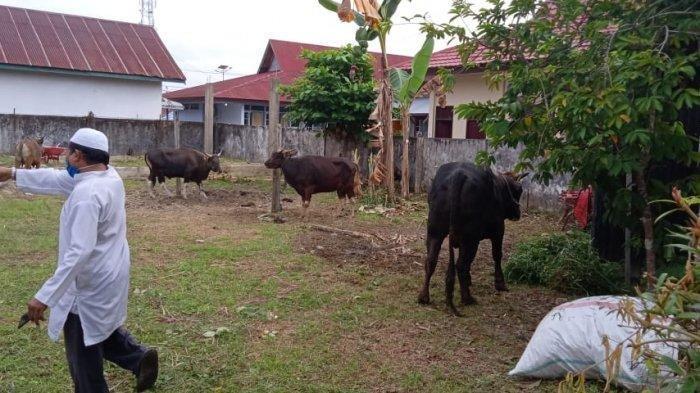 Cara Masak Hewan Kurban, Tips Daging Kambing Empuk & Tidak Bau, Jangan Dicuci dan Pakai Daun Pepaya