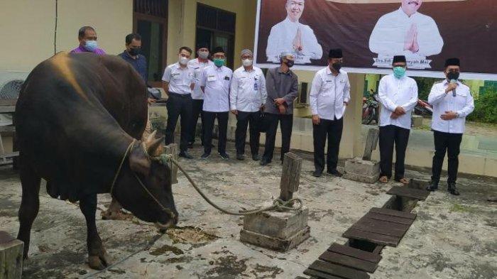Suasana penyerahan secara simbolis satu ekor sapi dari pemkab Kukar kepada pengurus Masjid Agung Tenggarong.