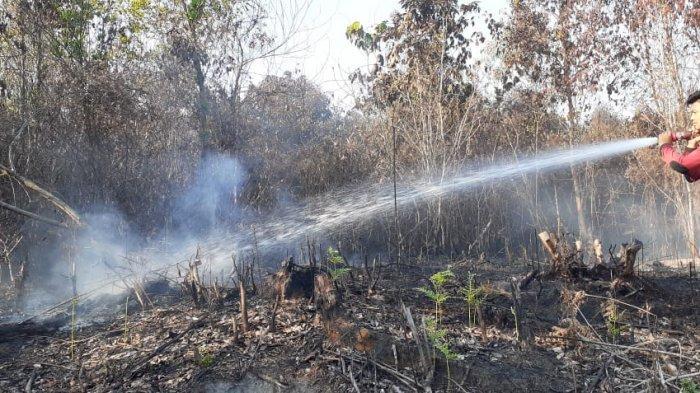22 Januari Padamkan Lagi, Karhutla di Penajam Kalimantan Timur, Sehari 4 Tempat Kebakaran Lahan