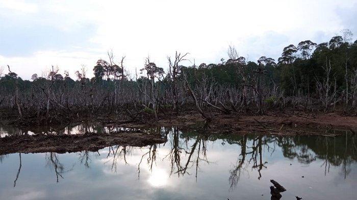 Wisata alam Hutan Mangrove di Desa Ardi Mulyo, Tanjung Palas Utara, Bulungan, Kalimantan Utara.