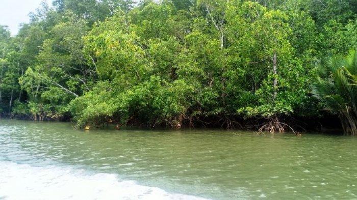 Rombogan Wartawan Kunjungi Muara Adang, Melihat Komitmen Warga Desa Menjaga Hutan Mangrove