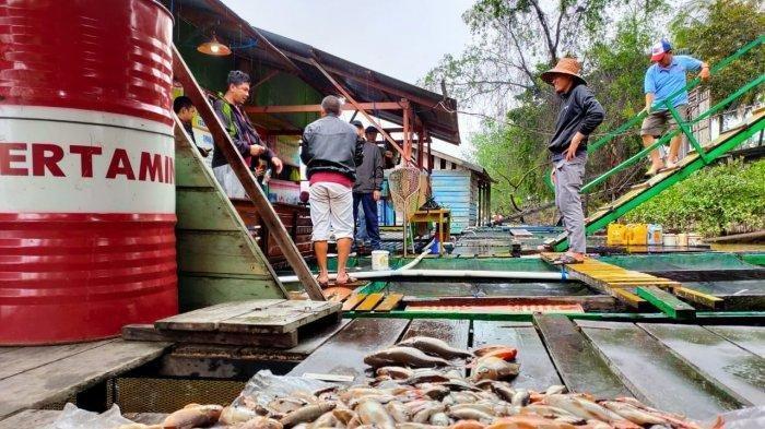Soal Ganti Rugi Ikan Mati di Sungai Segah, Kadis Perikanan Berau Sebut Masih Mencari Jalan Keluar