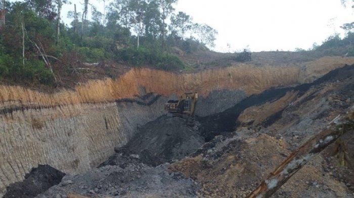 Batubara di Tahura Bukit Soeharto Dijual ke Pulau Jawa, Balai Gakkum Temukan Titik Galian Baru