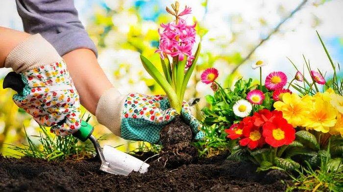 Merawat Taman Bunga Di Halaman Rumah Ternyata Bisa Bikin Bahagia Lho Tribun Kaltim