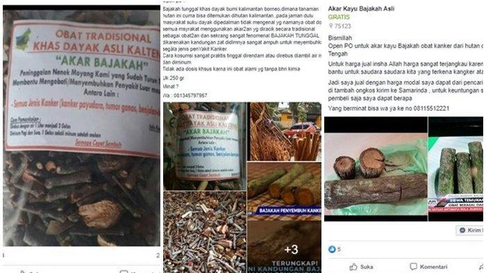 Khasiatnya untuk Kanker Payudara Mengemuka, Info Penjualan Kayu Bajakah dan Harga Mulai Beredar