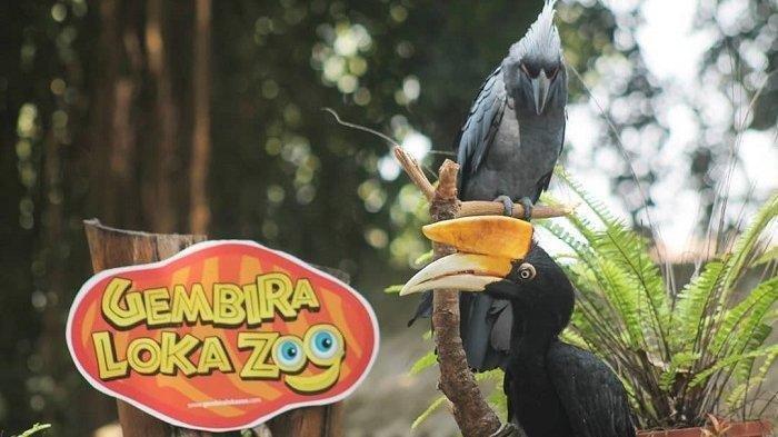 Kebun Binatang Gembira Loka Zoo Telah Dibuka Kembali Mulai 13 September 2021, Ini Harga Tiket Masuk
