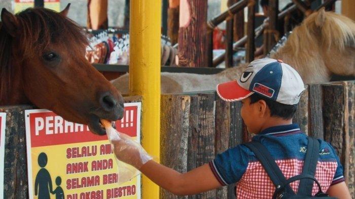 Liburan Akhir Pekan Ingin ke Biestro Indonesia Cafe, Bisa Menaiki Kuda dengan Harga Rp 20.000
