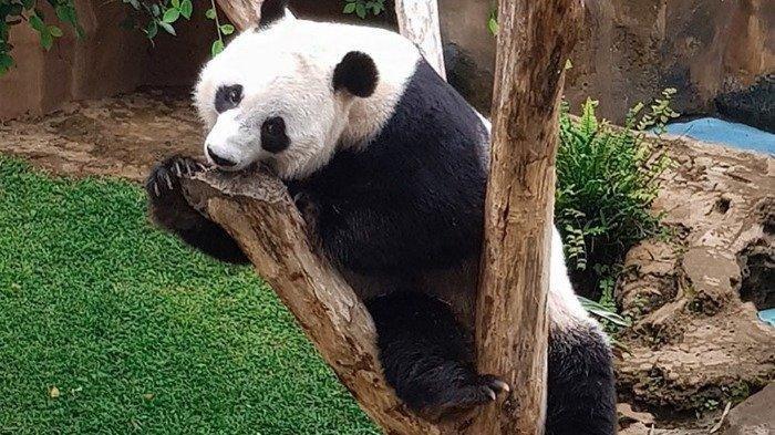 Berencana Liburan ke Taman Safari Bogor, Ini 6 Aktivitas Seru yang Bisa Dilakukan Wisatawan