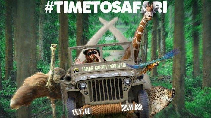 Taman Safari Bogor Menawarkan Promo Tiket Masuk Diskon 20 %, Ini Syarat dan Ketentuannya