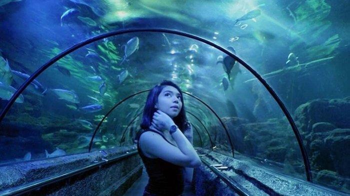 Ingin Liburan Bersama Keluarga di Seaworld Ancol, Ini Harga Tiket Masuk, Lengkap dengan Jam Bukanya