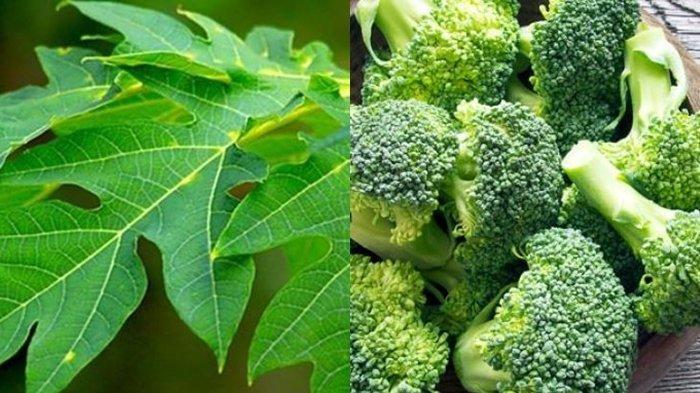 Makanan-makanan Alami ini Dijamin Ampuh Percepat Sembuhkan Demam Berdarah, Salah Satunya Brokoli